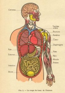 Body Systems Series - An Herbal Approach