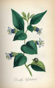 The Magic of Poisonous Plants Workshop
